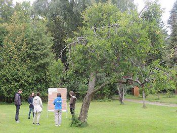 Kleingruppe arbeitet draußen unter Obstbaum an Pinnwand